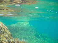 beachgreece58s.jpg