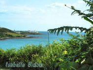 beachirl29s.jpg