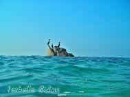 beachtoss008s.jpg
