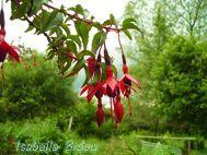 flowers1s.jpg