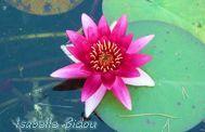 flowers4s.jpg