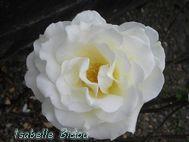 flowers5s.jpg