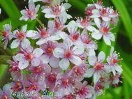 flowers6s.jpg