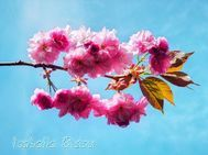 flowers8s.jpg