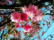 flowers9s.jpg